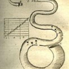2011 - Le Serpent sans sornettes